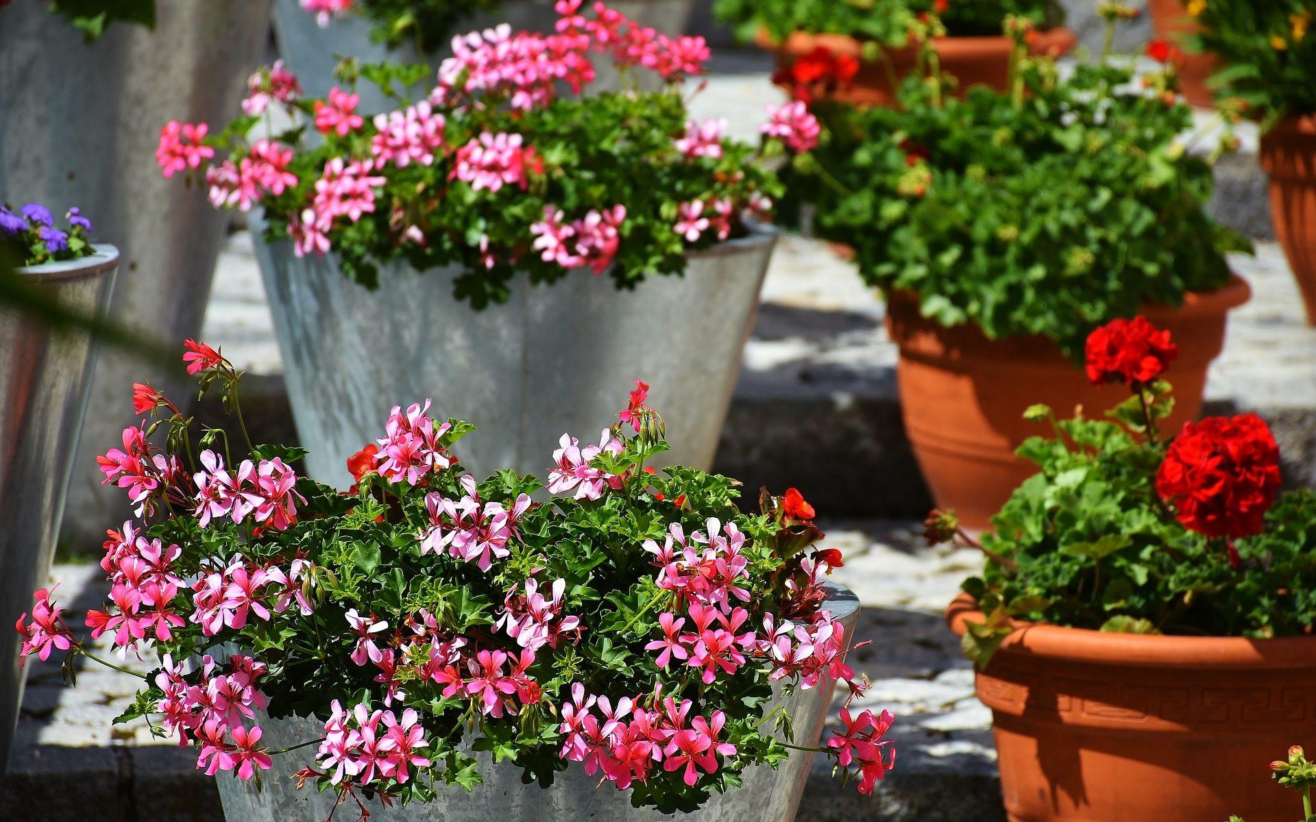 Gratis Balkonblumen auf geldsparblogger.de
